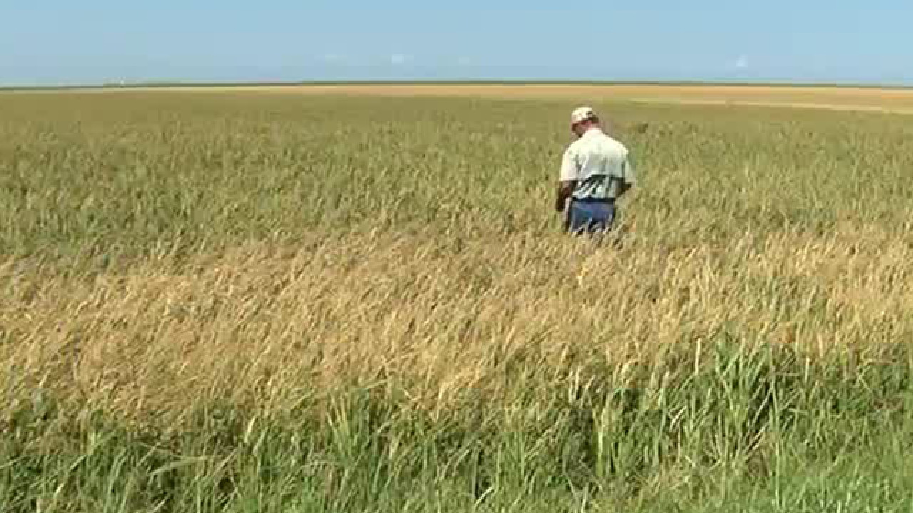 Crops in the Glades hit hard by Hurricane Irma