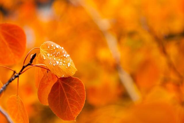 PHOTOS: Fall foliage hits the Sierras