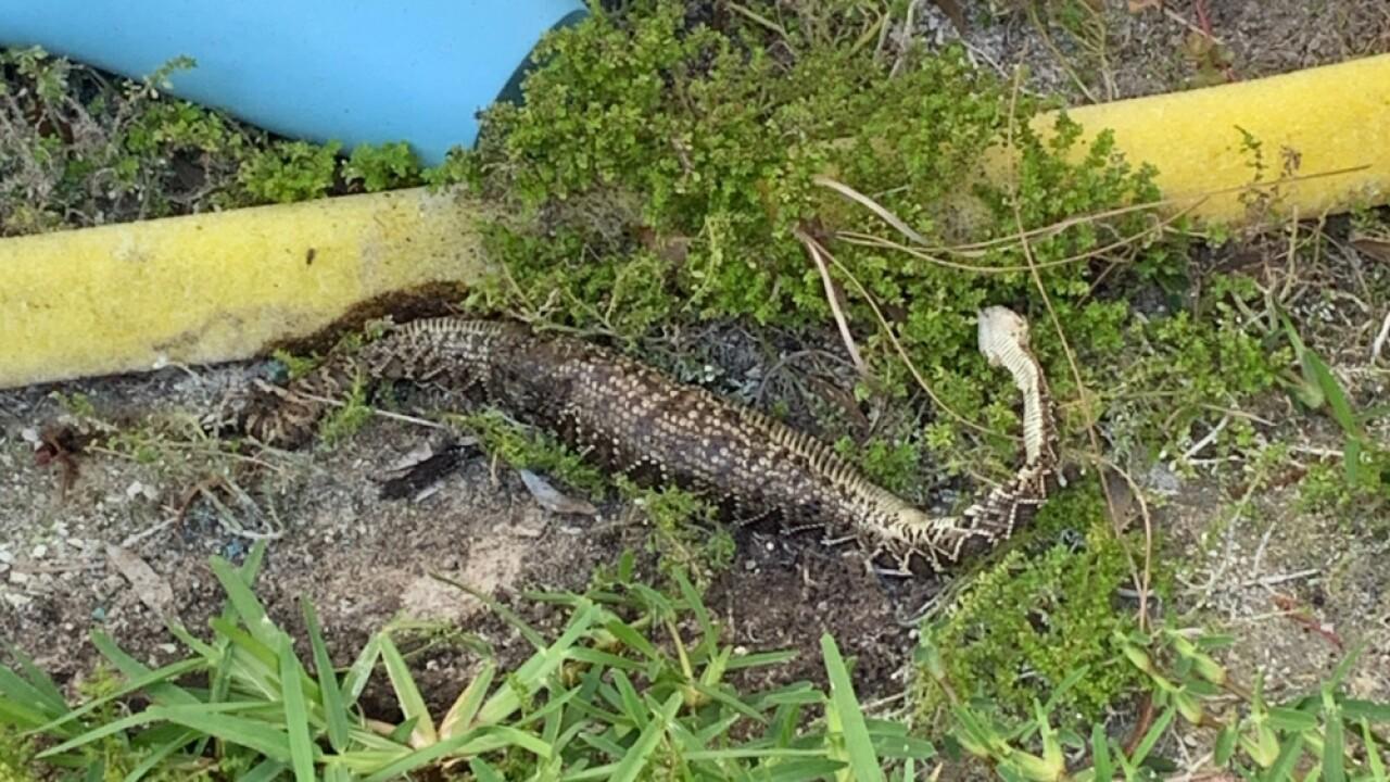 rattlesnake 3.jpg
