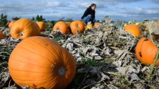 40 ways to celebrate National Pumpkin Day today — including deals and freebies