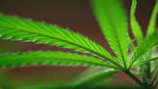 Bring your own weed: Denver allows pot in public spaces