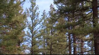 Daines, Feinstein introduce forest management bill