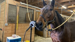 China Dream takes questions ahead of opening day at the Buffalo Raceway