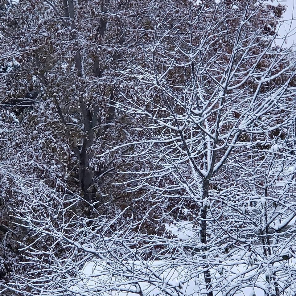 Berea Snow