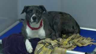 Maclean-Cameron Animal Adoption Center