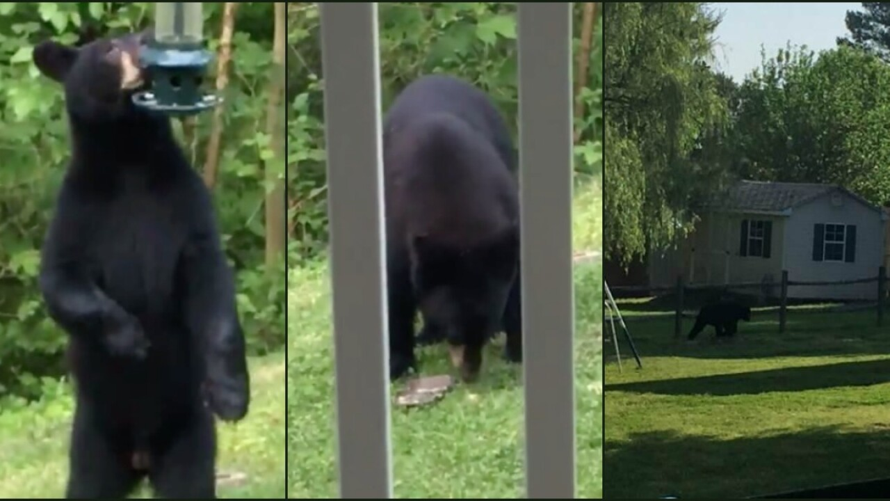 Black bear spotted in neighborhood: 'He just ripped down the birdfeeder'