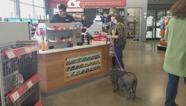 Pig at Kum and Go
