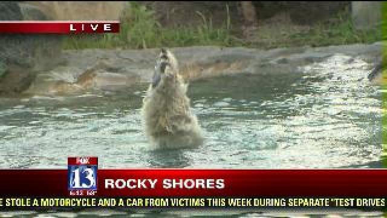 Polar bear plays in pool at zoo's new exhibit