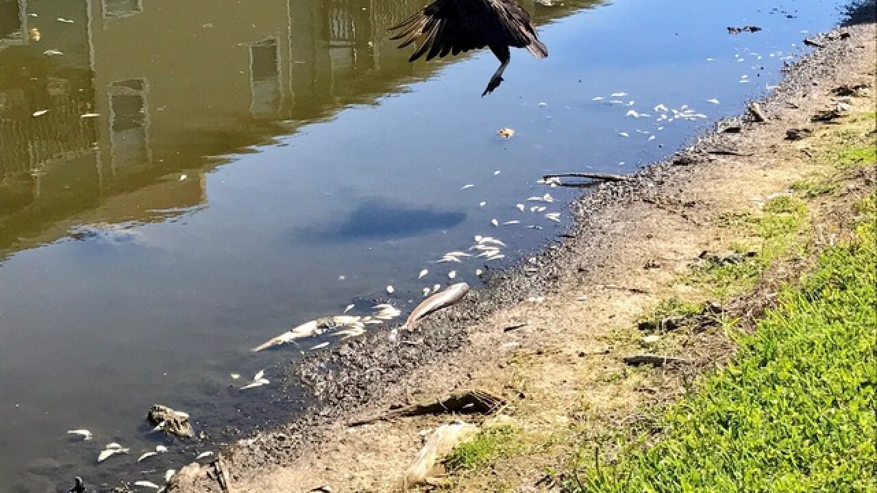 FWC: Drought killing thousands of fish