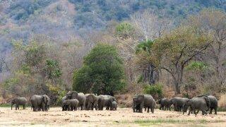Elephants Wildlife Conservation Society Photo.jpeg
