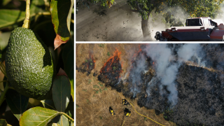 Ag Report: Avocados, Walnuts and Wildfires