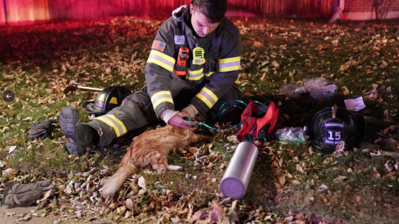 Paramedics Use CPR on Cat