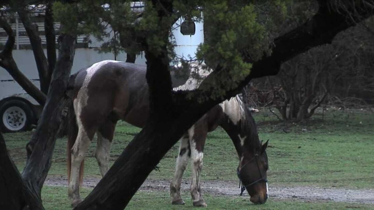 Nonprofit offers horse rides for people dealing with mental health issues