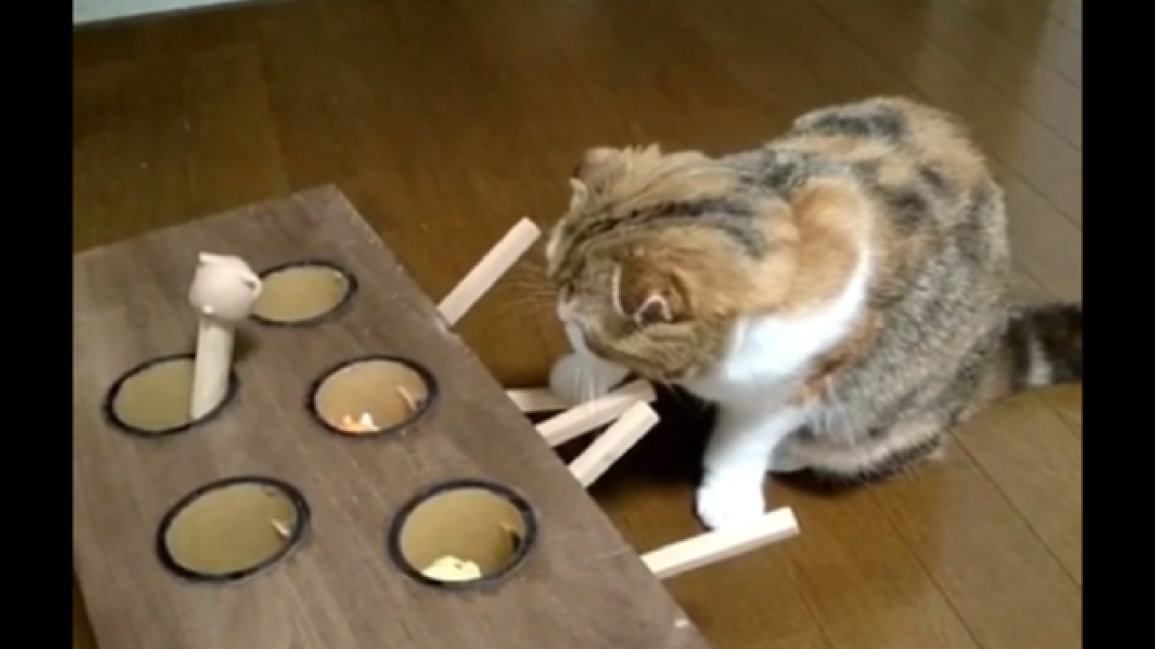 WATCH: Cat gives its best in homemade whack-a-mole game