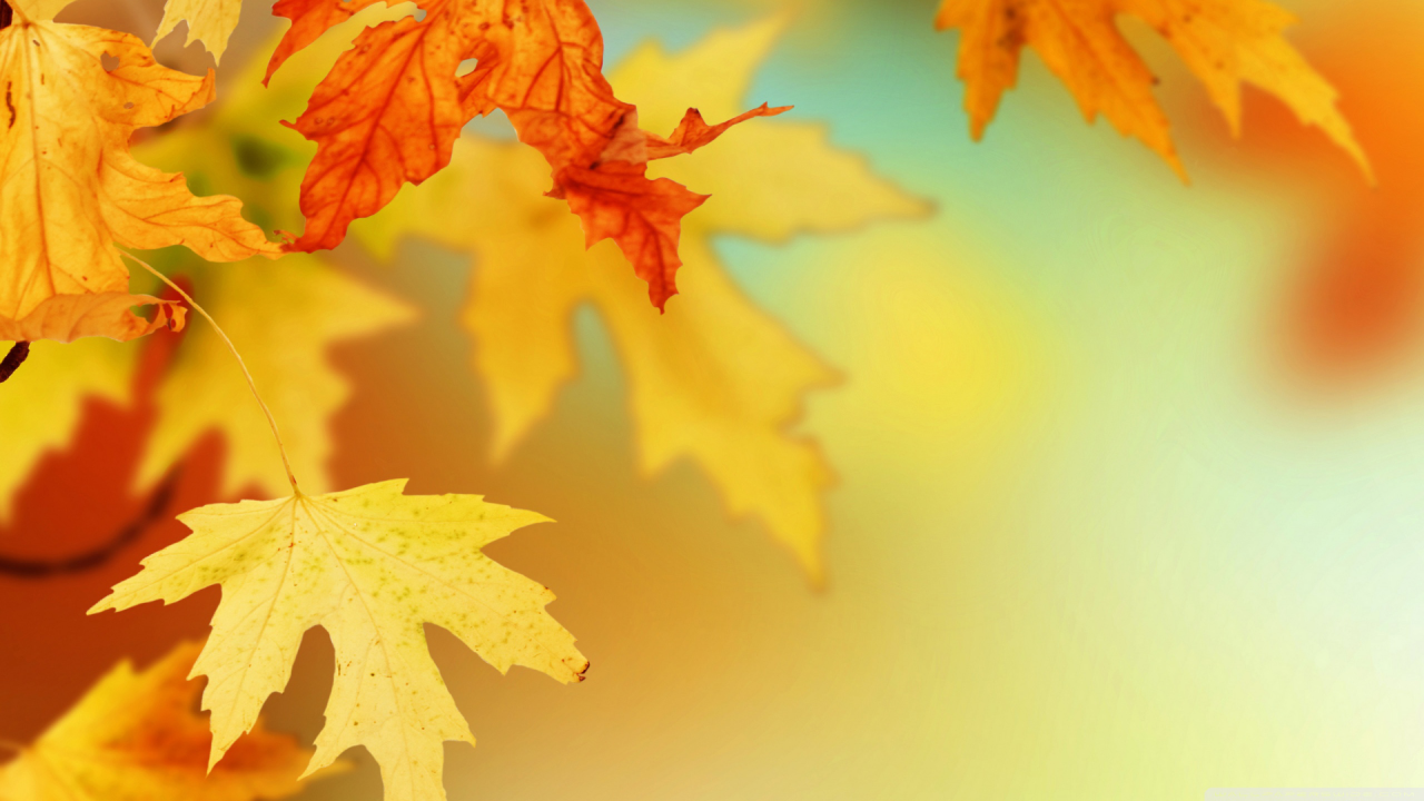 wx-fall leaves.png