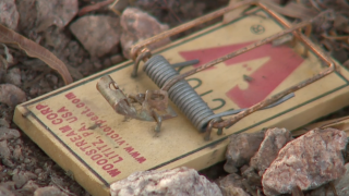 Ahwatukee couple fed up with dog poop sets mouse trap