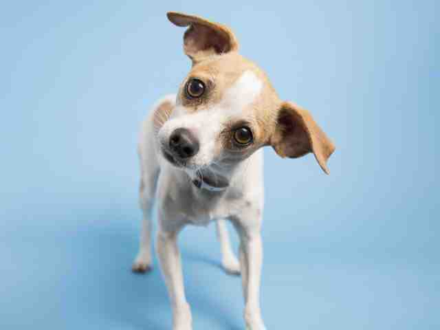 Adoptable pets from Arizona Humane Society and Maricopa County Animal Care and Control (1/3)