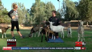 Austin Westfall Does Goat Yoga