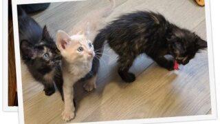 Pet Tales: Kittens