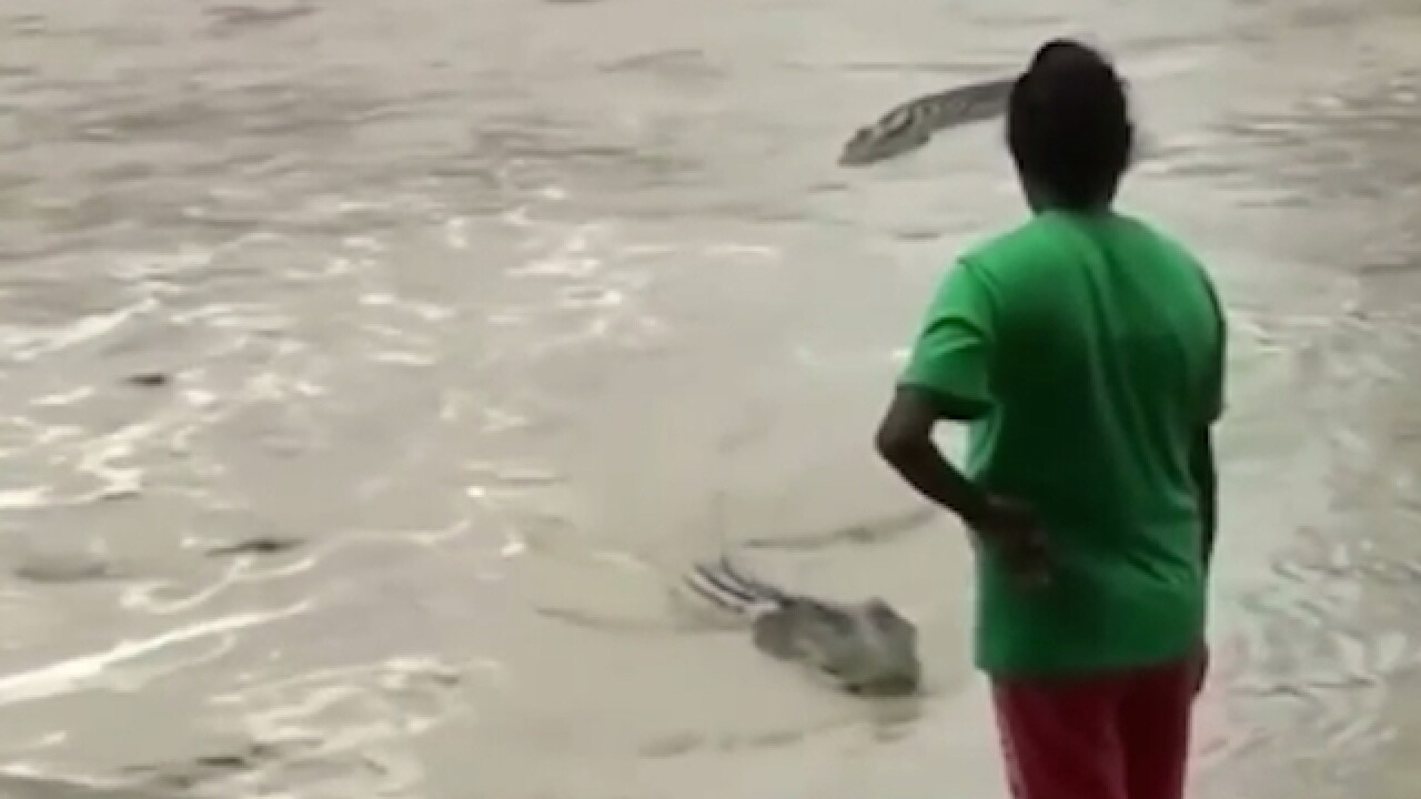 Video: Woman shoos away crocodile with flip-flop