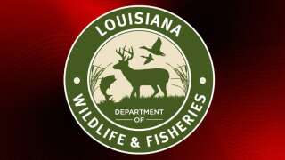 LDWF agents cite two men for illegal possession of an alligator in St. Mary Parish