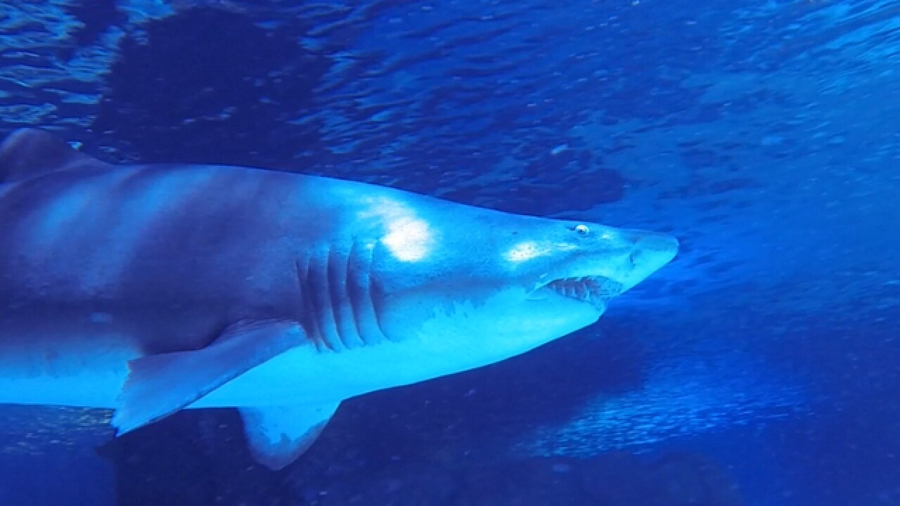WAVE Foundation at Newport Aquarium brings sea creatures ...