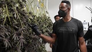 Calvin Johnson Cannabis Marajuana Business
