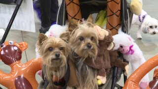 Pet Expo nets $40,000 for Henrico HumaneSociety