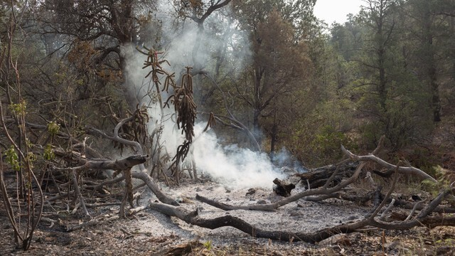 GALLERY: White Mountains regroup after June 2016 Cedar Fire