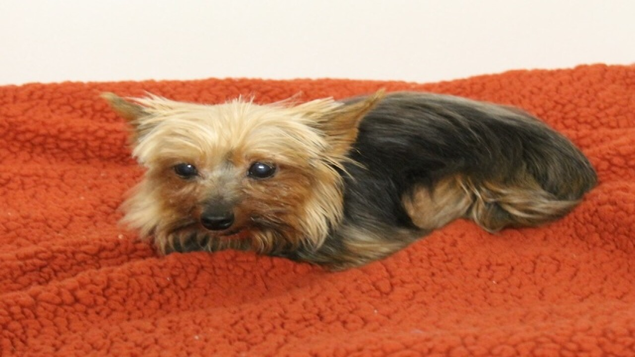 AAWL: Puppy mill pups ready for adoption