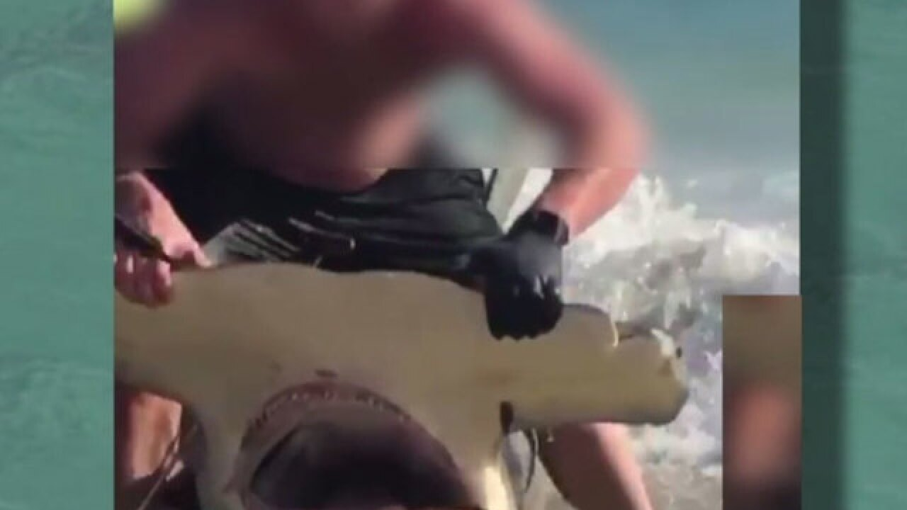Caught on tape: Hammerhead shark dragged to shore