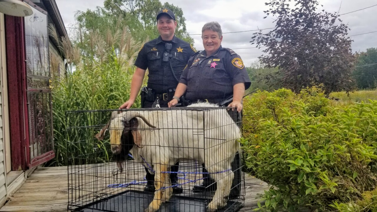 She called police because her house was broken into. Officers found a goat asleep in the bathroom