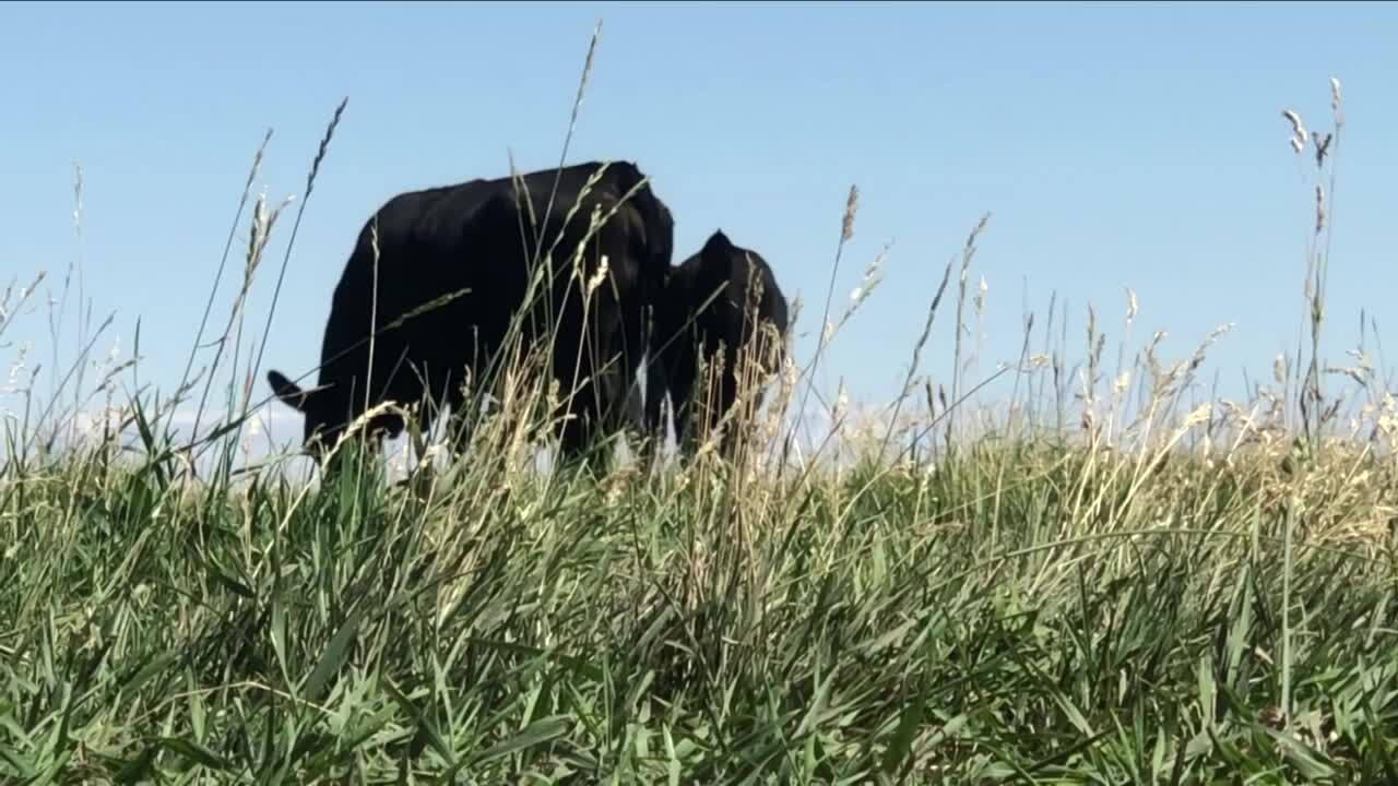 Montana Cattlemen's Association seeks help in feeding the hungry