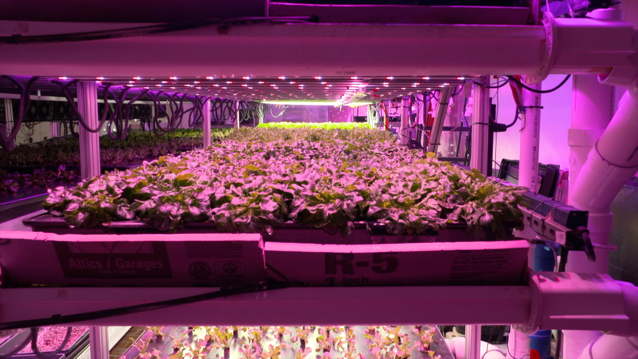 Indoor farm of the future uses robots, A.I. and cameras to help grow produce