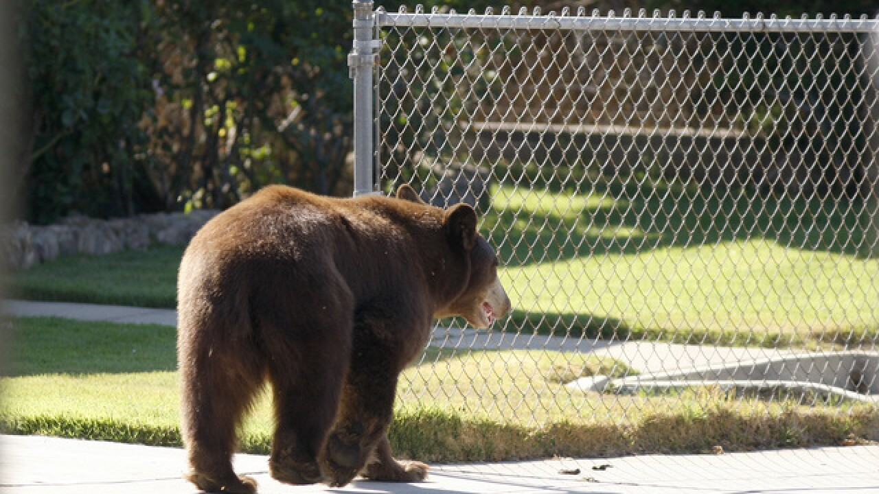 Fatal bear attacks are rare in Colorado, but possible