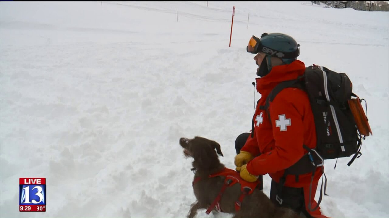 Solitude Ski Patrol trains with avalanche dogs