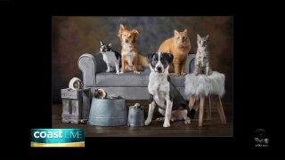 Tips for taking picture perfect pet photos on CoastLive
