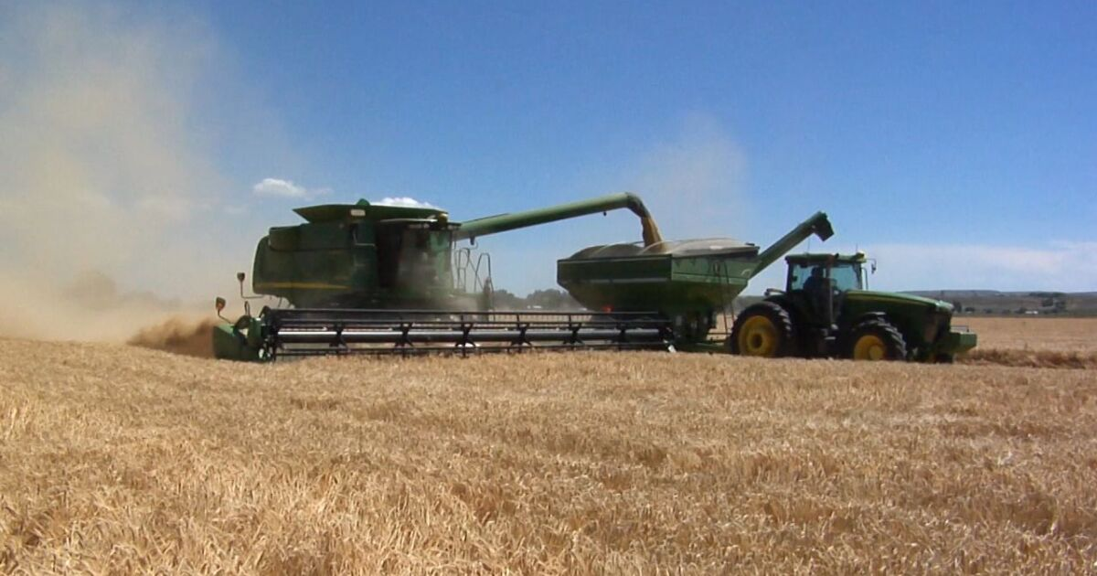 Molson Coors barley harvest underway in Montana and Wyoming