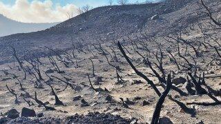 alisal fire burn scar refugio road 10-20-21.jfif