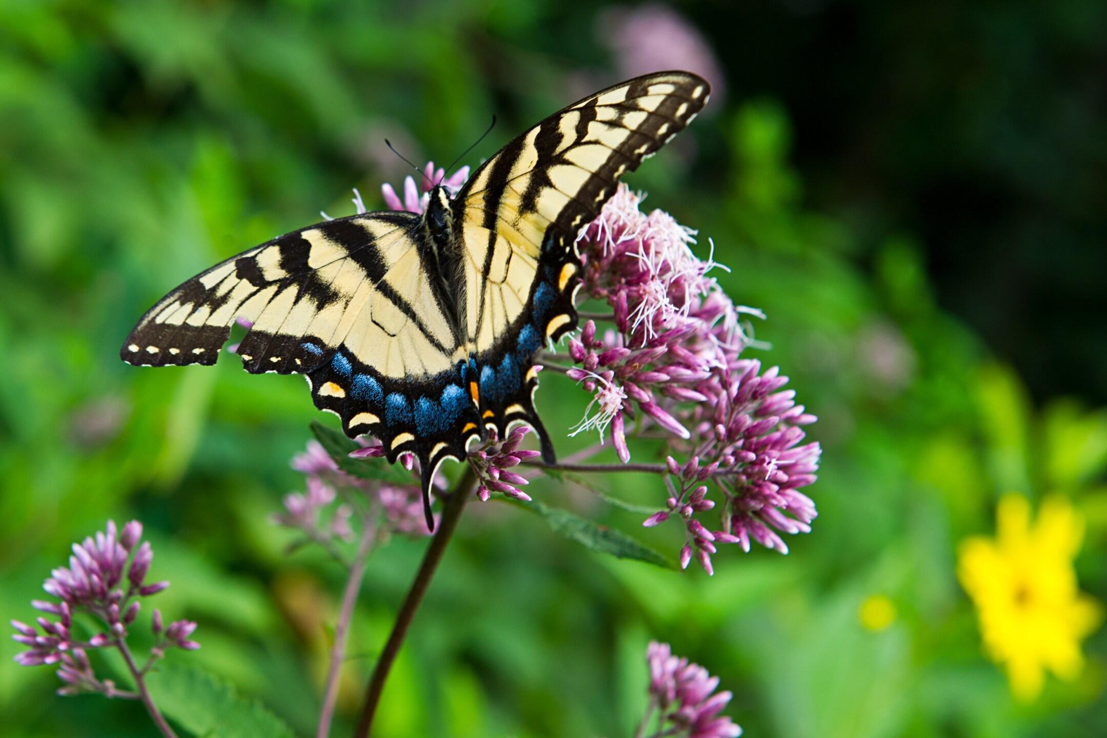 Photos: Norfolk Botanical Garden hosts third annual ButterflyFestival
