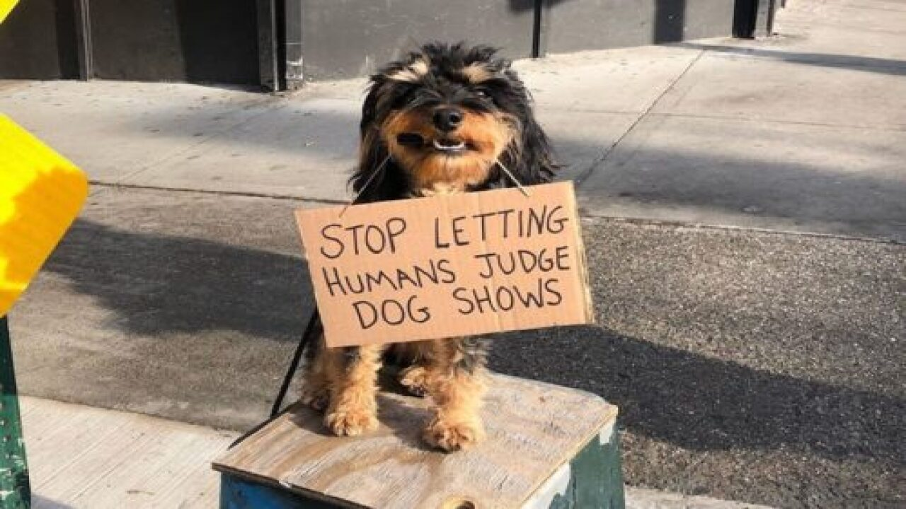 This Adorable Dog Holding Protest Signs Is Going Viral