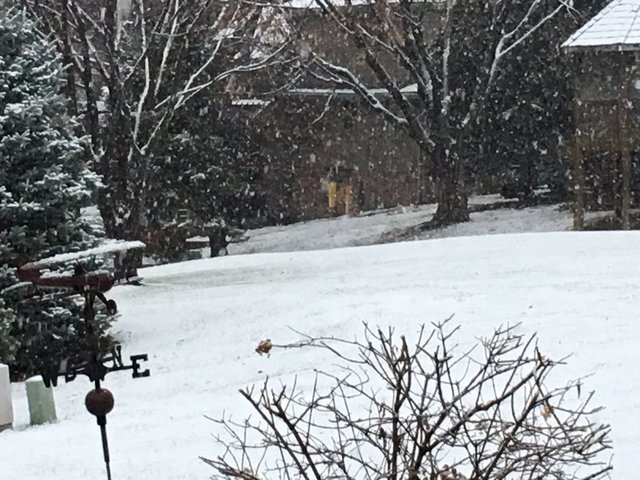 PHOTOS: Omaha Metro sees the first snowfall of the season