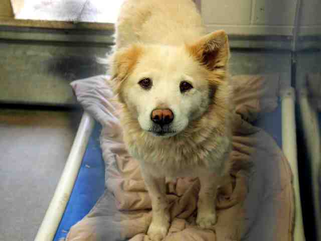 Adoptable pets from Arizona Humane Society and Maricopa County Animal Care and Control (3/28)