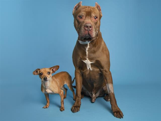 bella and neeno ahs dogs