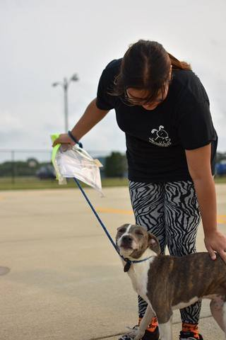 PHOTOS: Adoptable Houston dogs flown to Indy