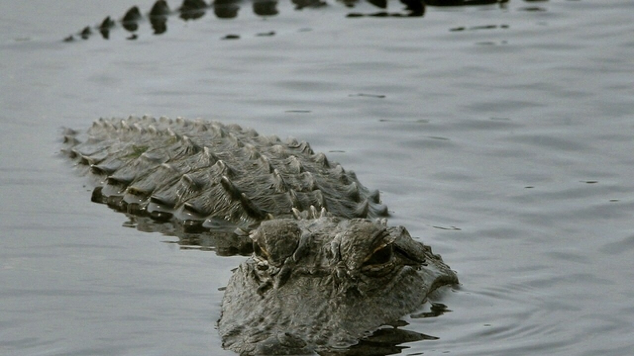 After fatal attack, theme parks weigh alligator warnings
