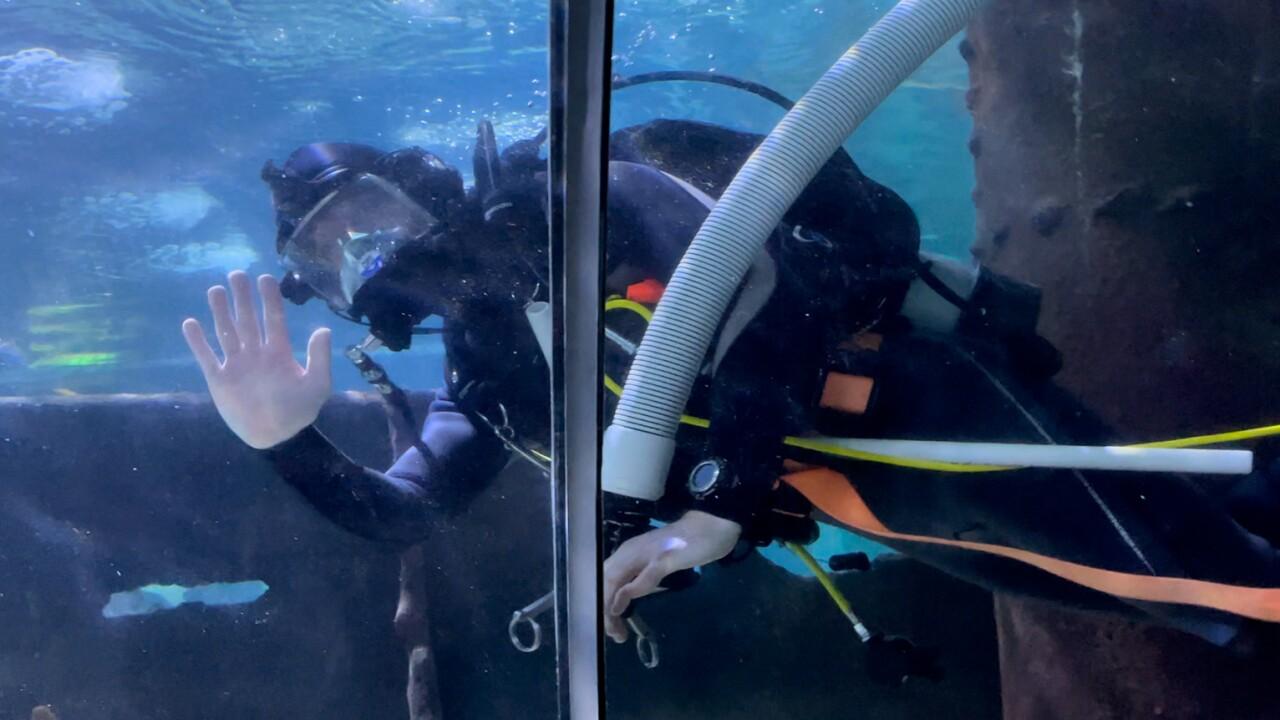 Cleveland Aquarium.jpg