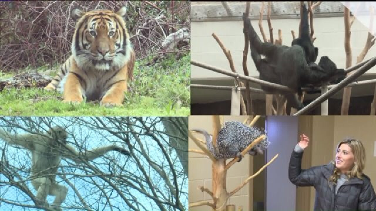 Virginia Zoo recognized for high standards of living for animals and conservation efforts