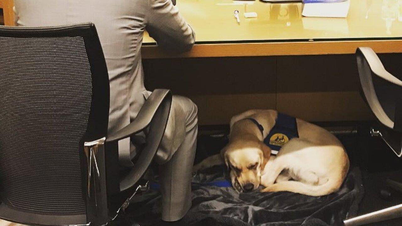 Denver DA's Office crime victims dog