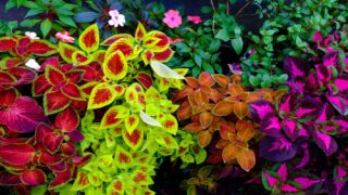 Garden Plants That Love To Grow In The Shade